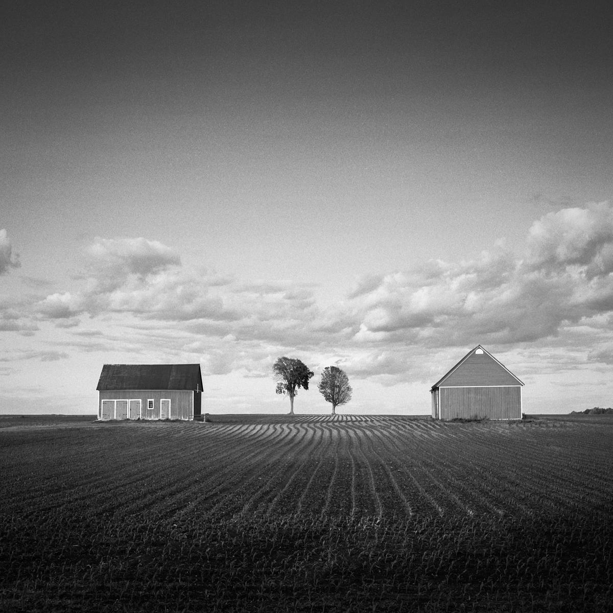 Barns & Trees