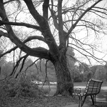Lonely tree, lonely bench